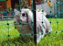 Sieť pre králiky